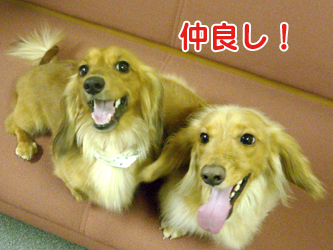 090602tenchan03.jpg