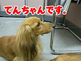 090817tenchan02.jpg