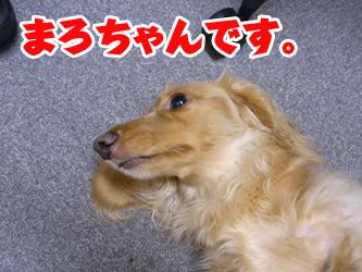 090817tenchan03.jpg
