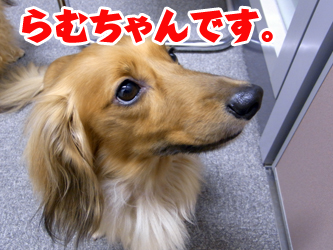 090817tenchan04.jpg
