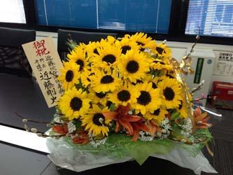 130305himawari02.jpg